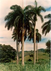 El lugar conocido como Cinco Palmas, donde se produjo el rencuentro