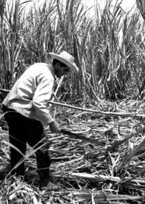 Reinaldo Castro Yedra, el mejor cortador de caña que conoció nuestro país, asume que su mayor orgullo es haberle sido fiel a Fidel
