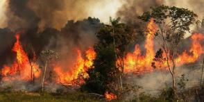 Los incendios en la Amazonía ha sido una de las noticias más comentadas en estos últimos días a nivel internacional, por tratarse de una de las reservas naturales más importantes a nivel mundial y producir el 20 % del oxígeno que respiramos. Foto: NASA
