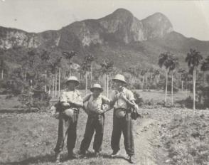 Fidel Castro Ruz explorando el pan de guajaibon, 1943
